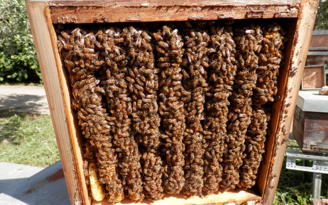 La gestione degli apiari