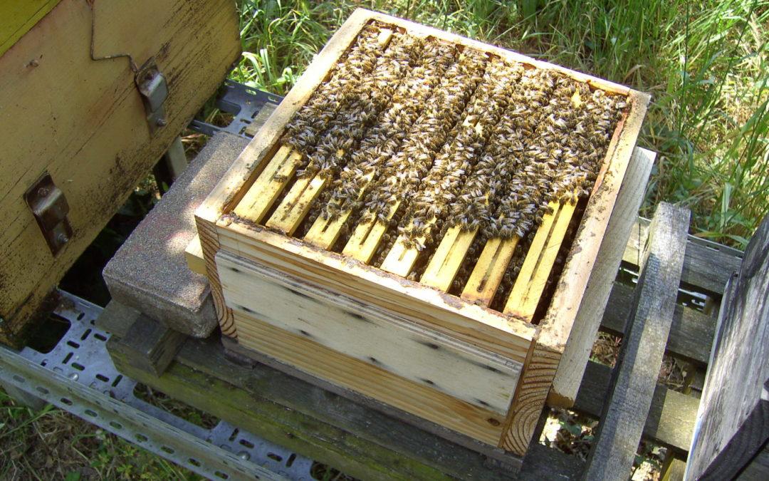 Quale dimora per le api?