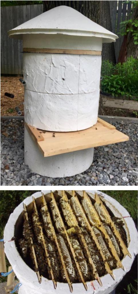 evoluzione della apicoltura biologica