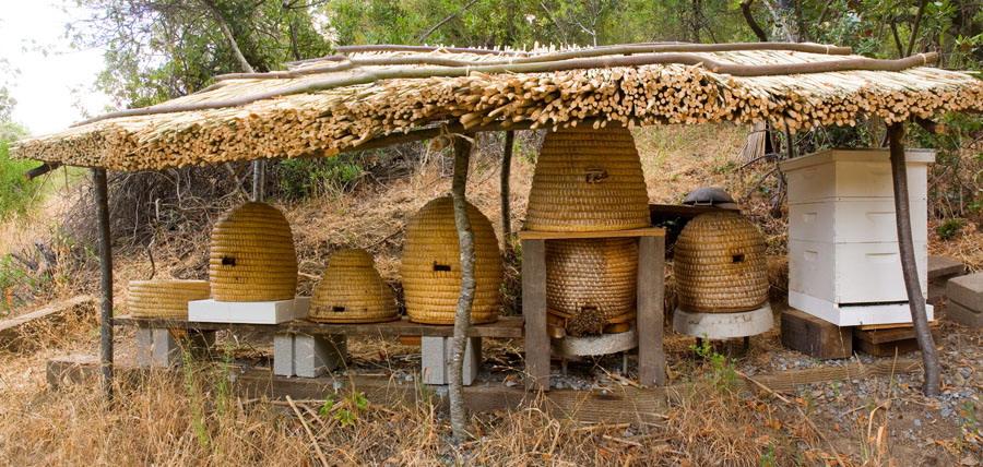 Le api sono animali domestici?
